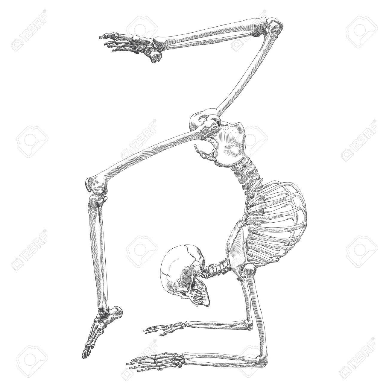 Menschliche Knochen Skelett Zeichnung. Tanzen Oder Gymnastische Tun ...