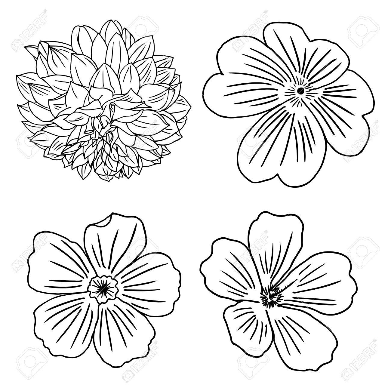 Satz Blumen Schwarz Weiss Floral Set Sammlung Von Hand Gezeichnet