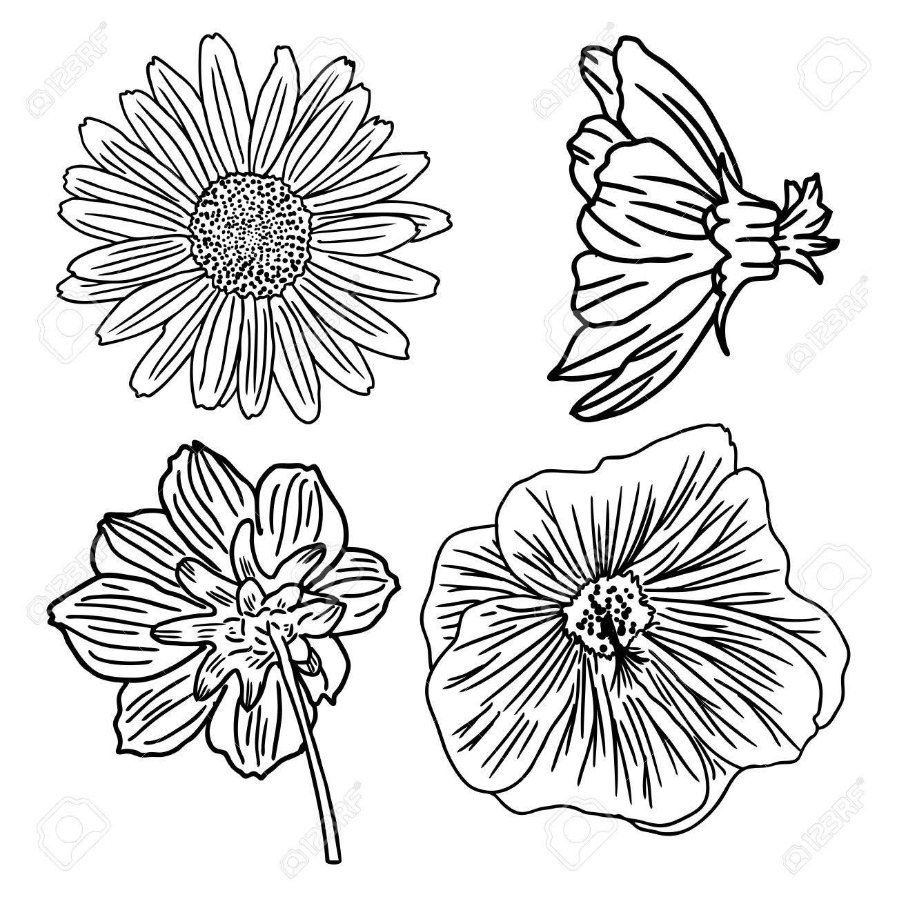 Set Von Blumen Schwarz Weiss Blumen Set Sammlung Von Hand