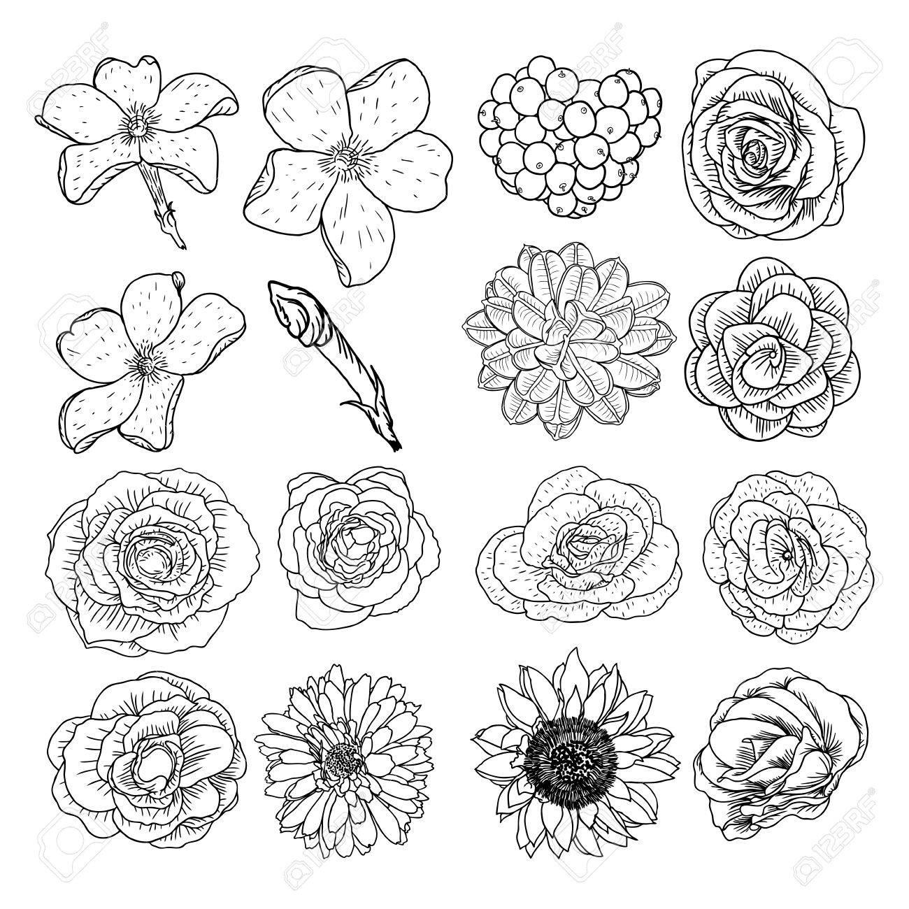 Vector Conjunto De Flores, Blanco Y Negro Colección De Elementos ...