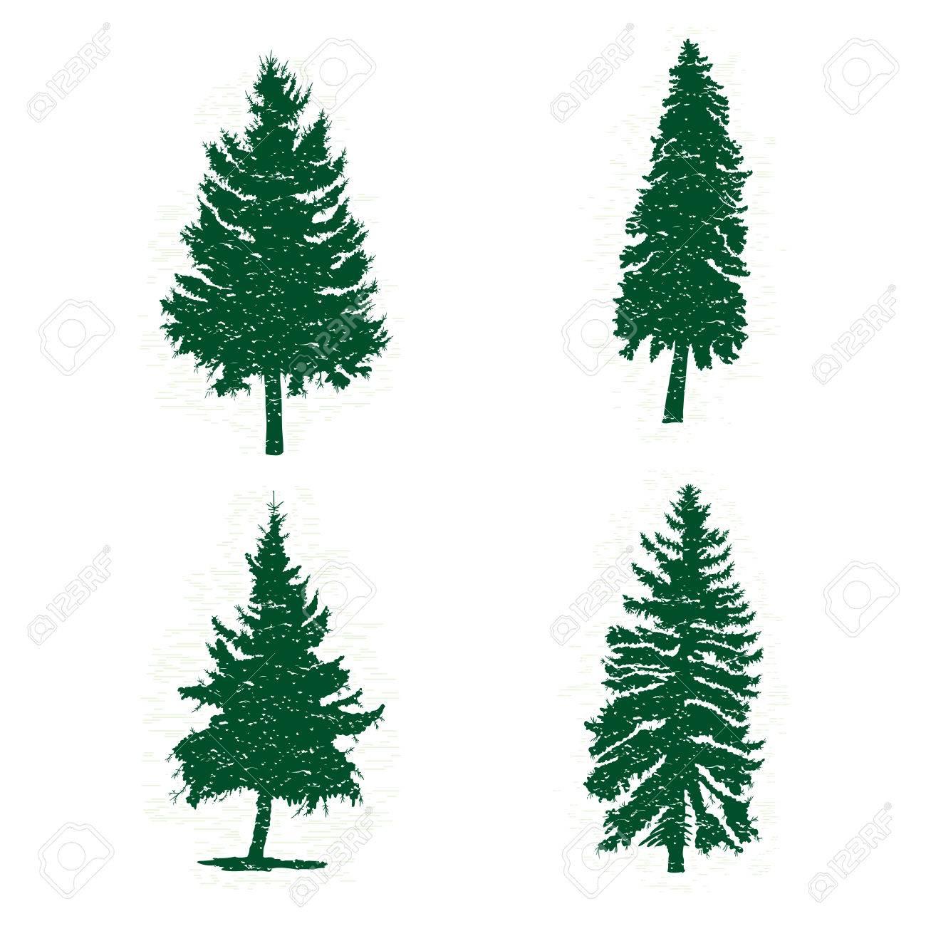 Conjunto De Diversas Siluetas De Los árboles De Pino Verde ...