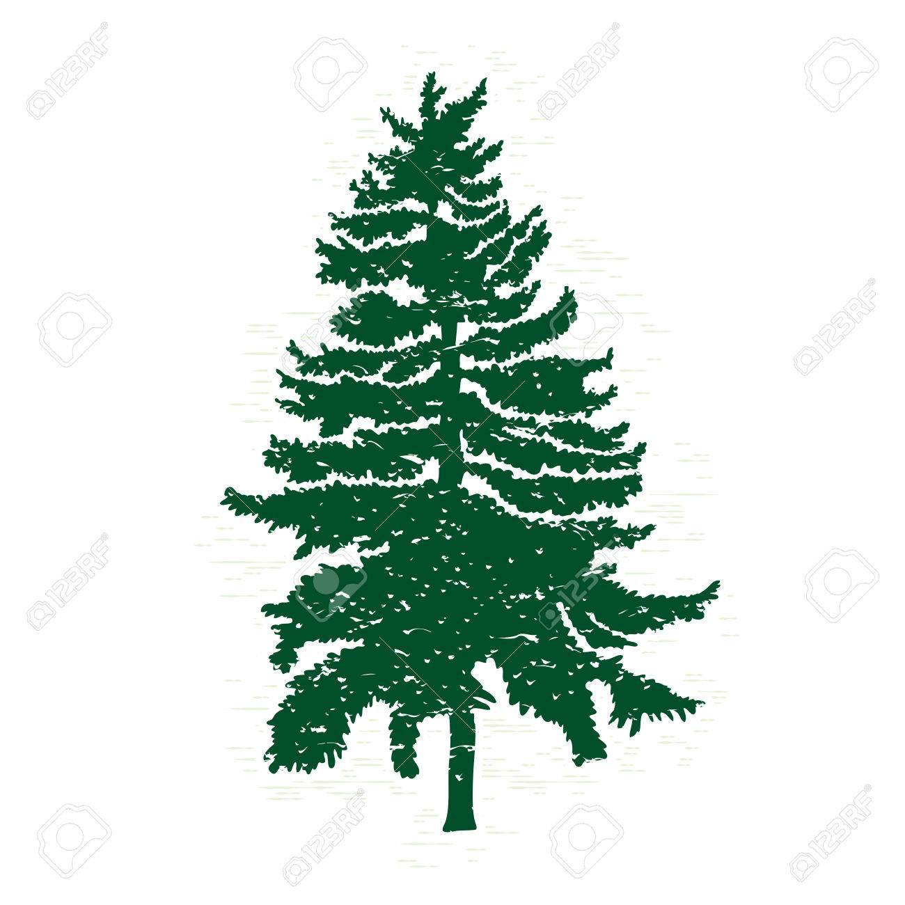vector evergreen silhouette of pine and fir tree conifer tree rh 123rf com pine trees vector silhouette vector pine trees
