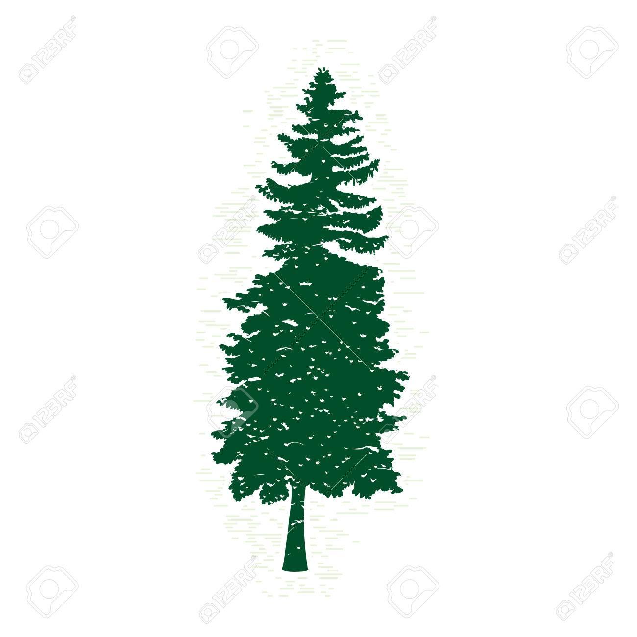 Siluetas De árbol De Pino Verde, Ilustración Vectorial. Plantilla De ...