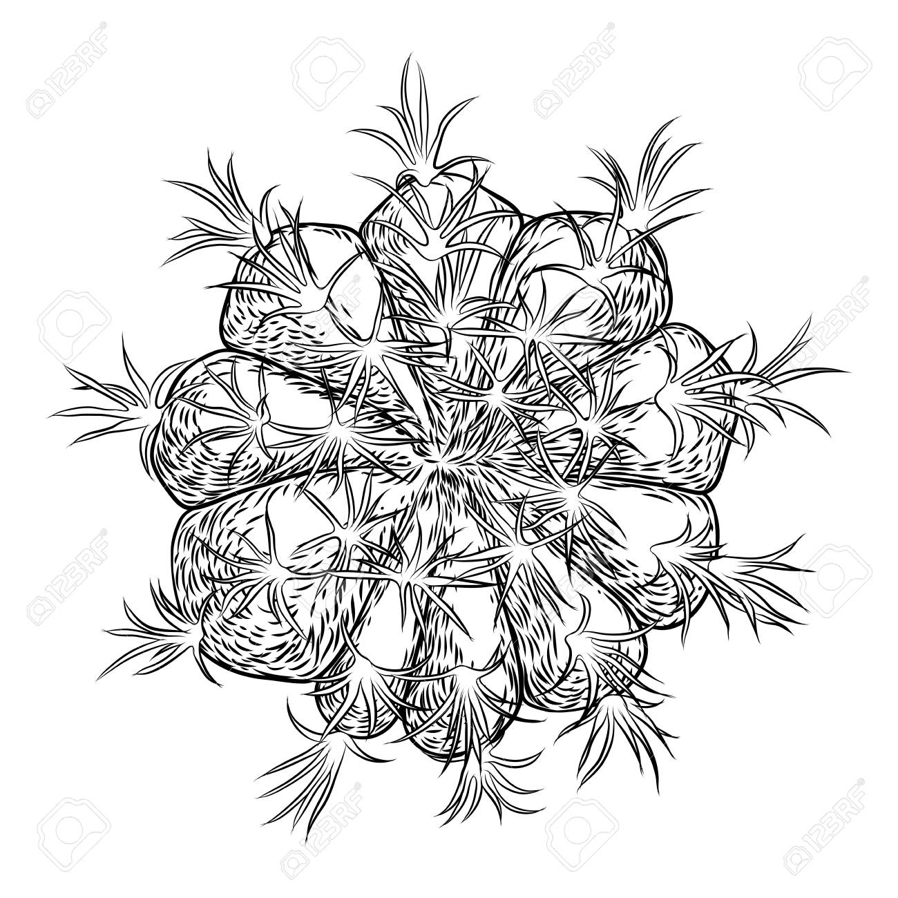 Cute Cactus Illustration Handmade Hand Drawn Outline Cacti And Royalty Free Cliparts Vectors And Stock Illustration Image 98311851