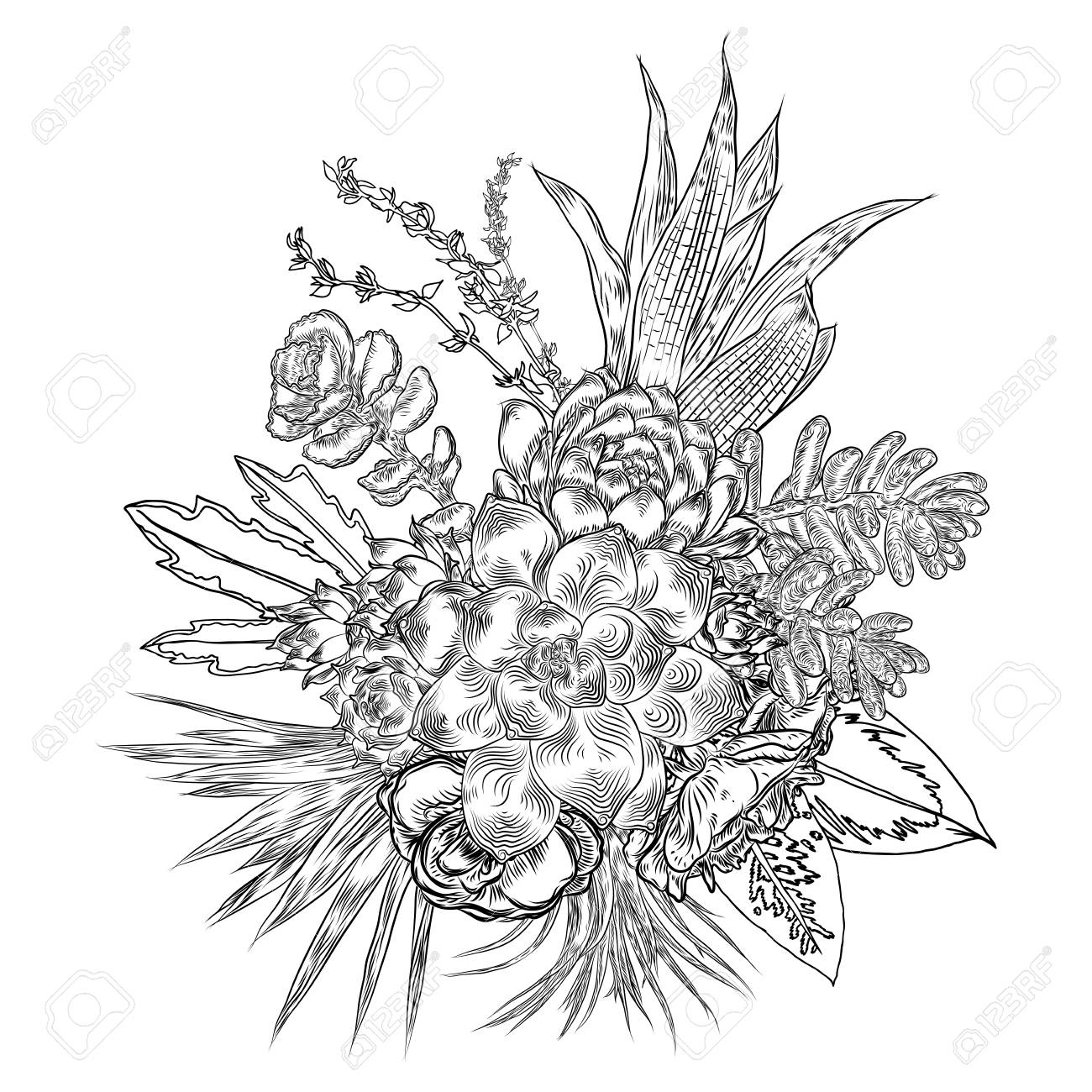 Composition Of Succulents Cactus Green Plants Botanical Drawing Royalty Free Cliparts Vectors And Stock Illustration Image 104013569