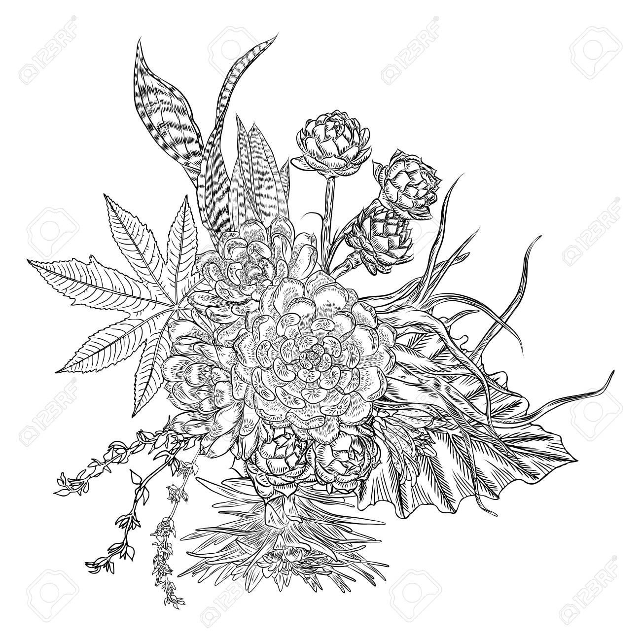 Composition Of Succulents Cactus Green Plants Botanical Drawing Royalty Free Cliparts Vectors And Stock Illustration Image 104013572