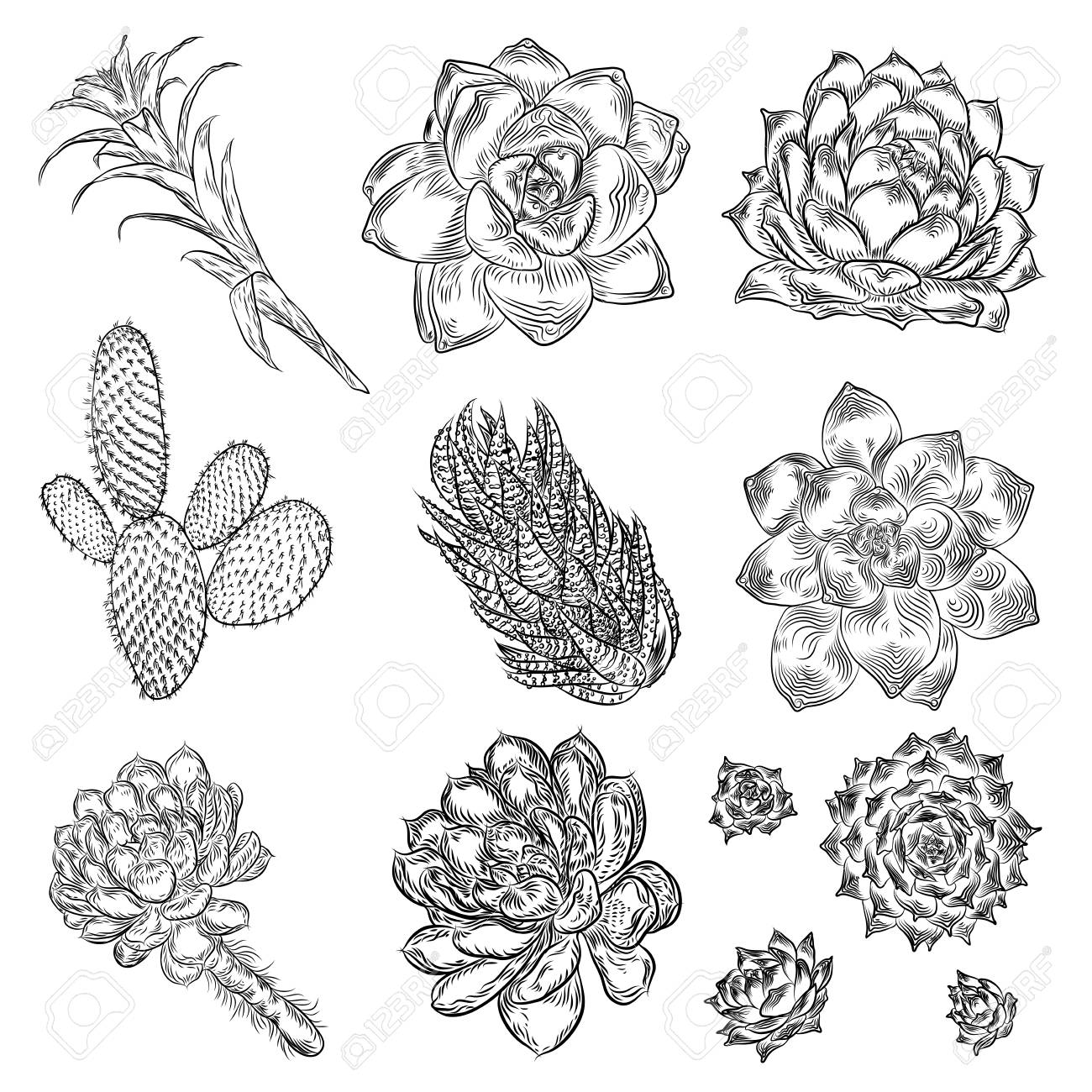 Cute Cactus Illustrations Handmade Set Hand Drawn Outline Cacti Stock Photo Picture And Royalty Free Image Image 108023455