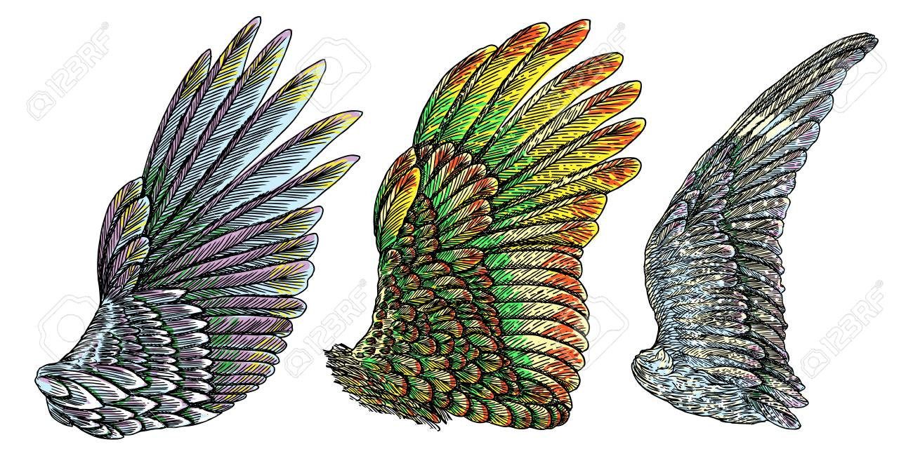 Set Of Colorful Bird Wings Of Different Shape In Open Position