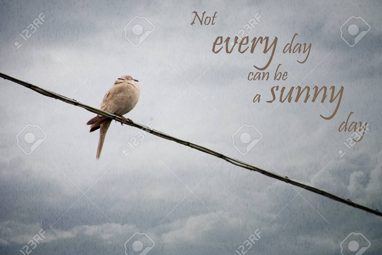 Truism. Soggy Bird On Wire In Rain. Not Every Day Can Be A Sunny ...