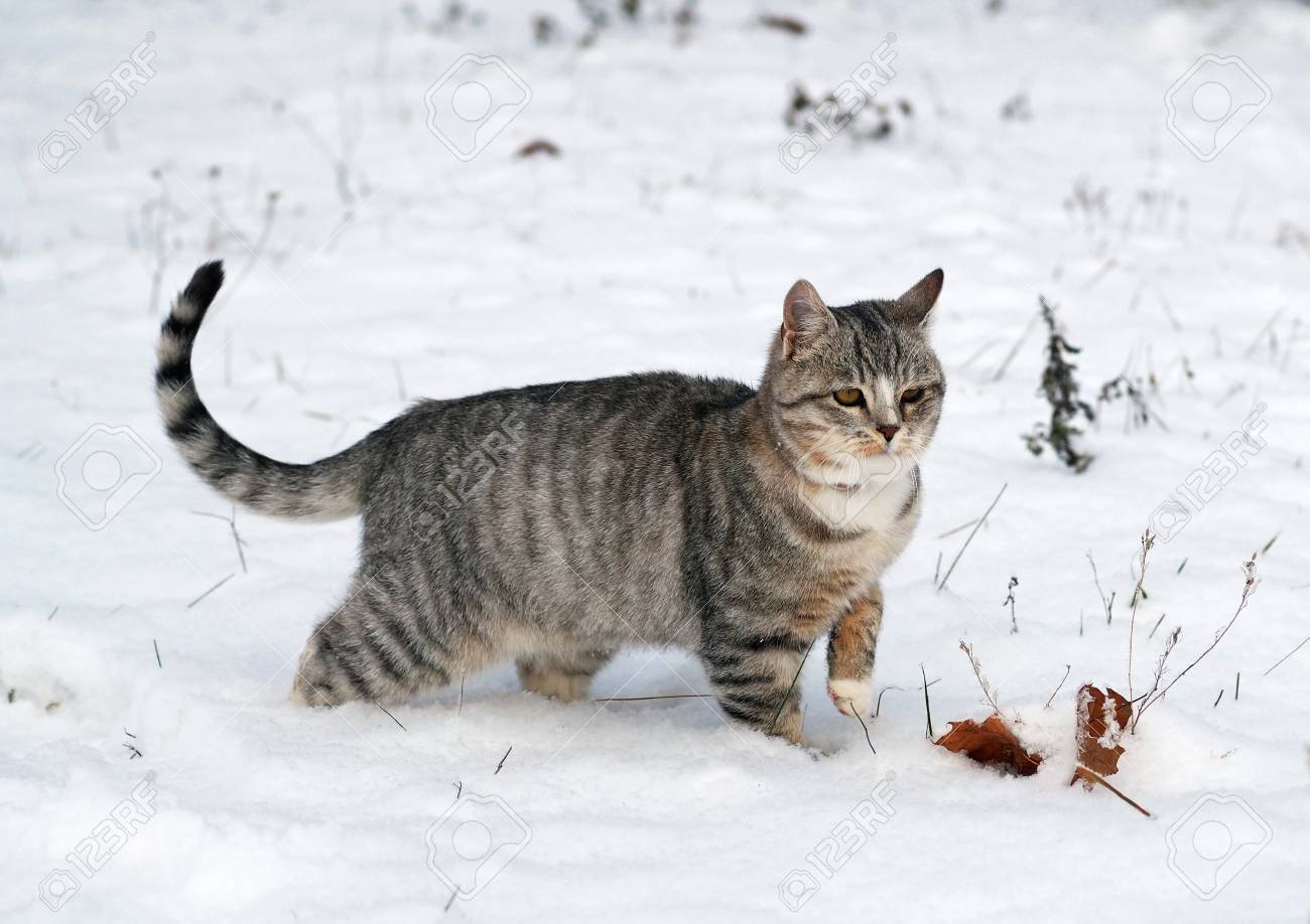 Image result for cat in snow