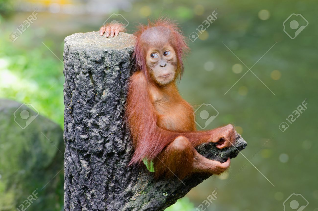 monkey stock photos royalty free monkey images and pictures