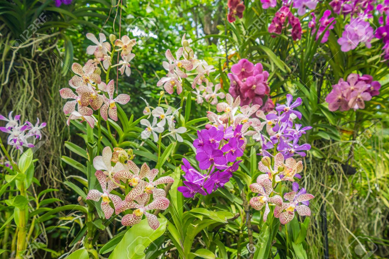Beautiful flowers 2019 types of orchid flowers beautiful flowers types of orchid flowers various pictures of the most beautiful flowers can be found here find and download the prettiest flowers ornamental plants izmirmasajfo