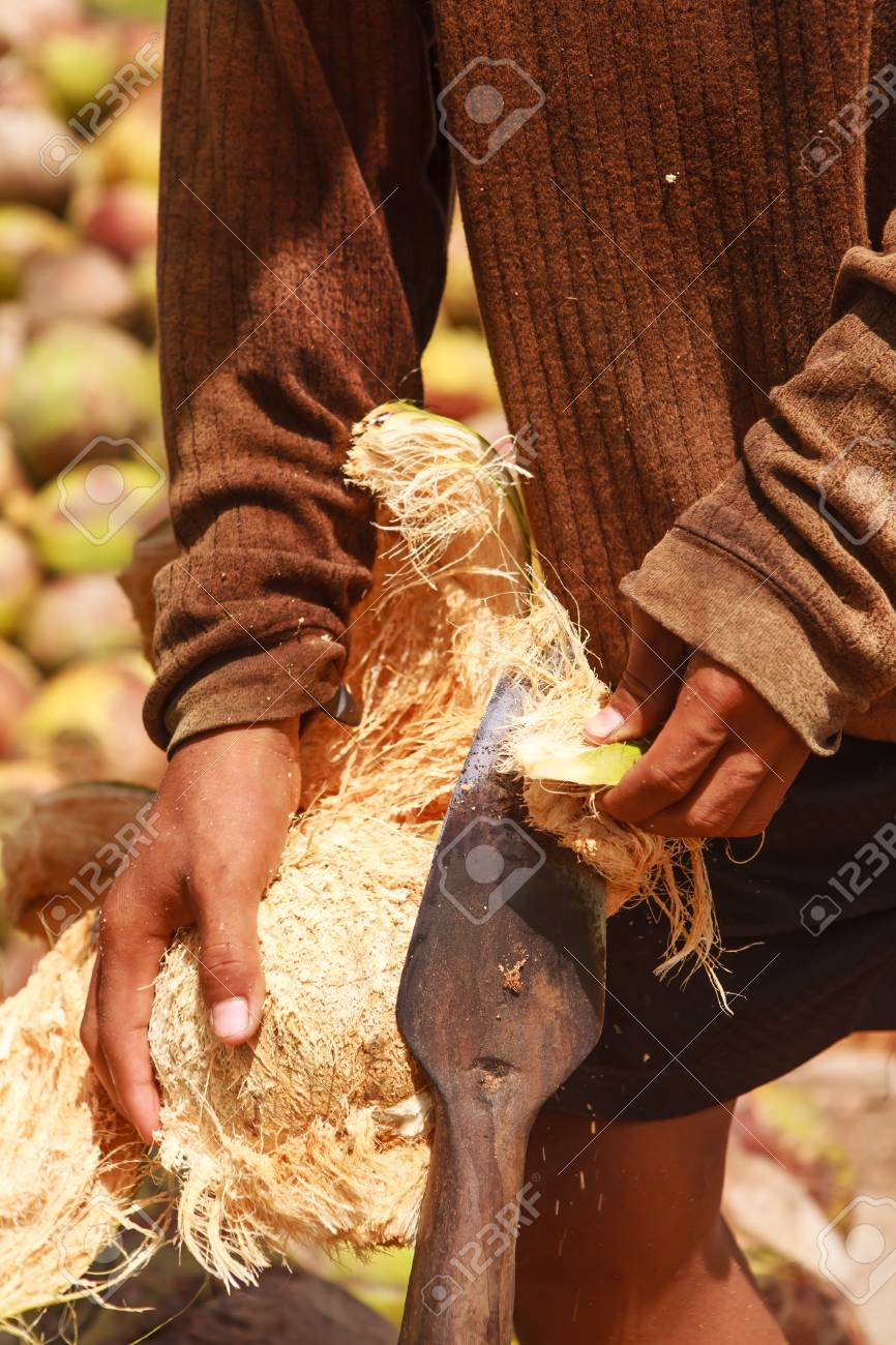 Islanders are peeled coconut Stock Photo - 12948583