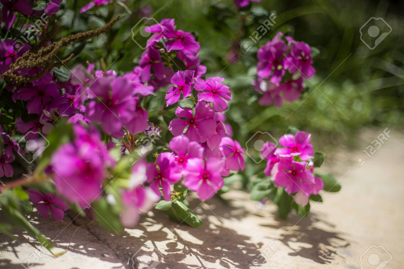 Little Pink Flowers In A Bush With Other Flowers In The Background