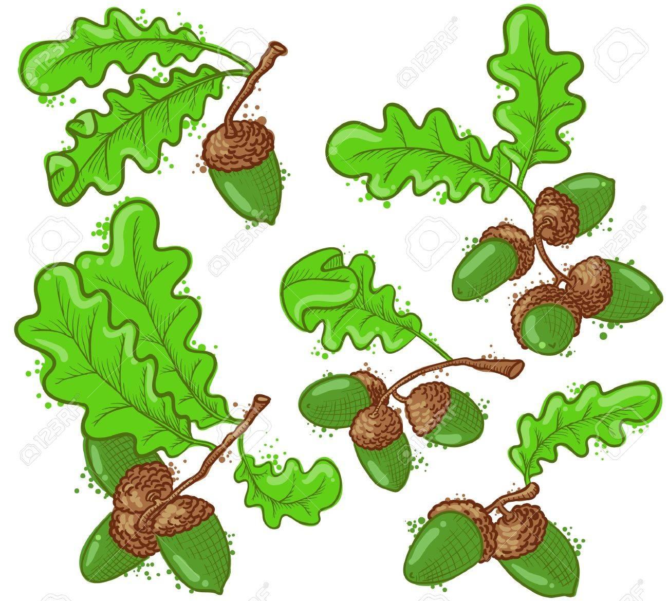 Cute acorns set, vector illustration Stock Vector - 12248890