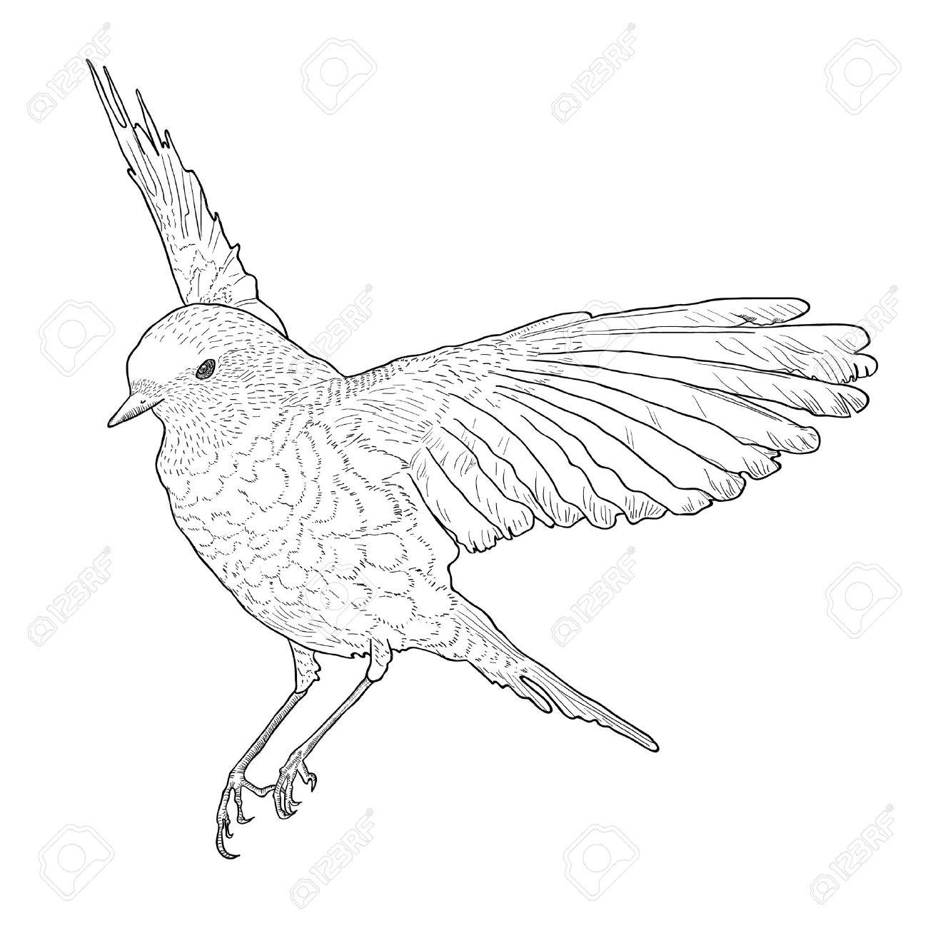 Ziemlich Kostenlose Vogel Vorlagen Zeitgenössisch - Entry Level ...
