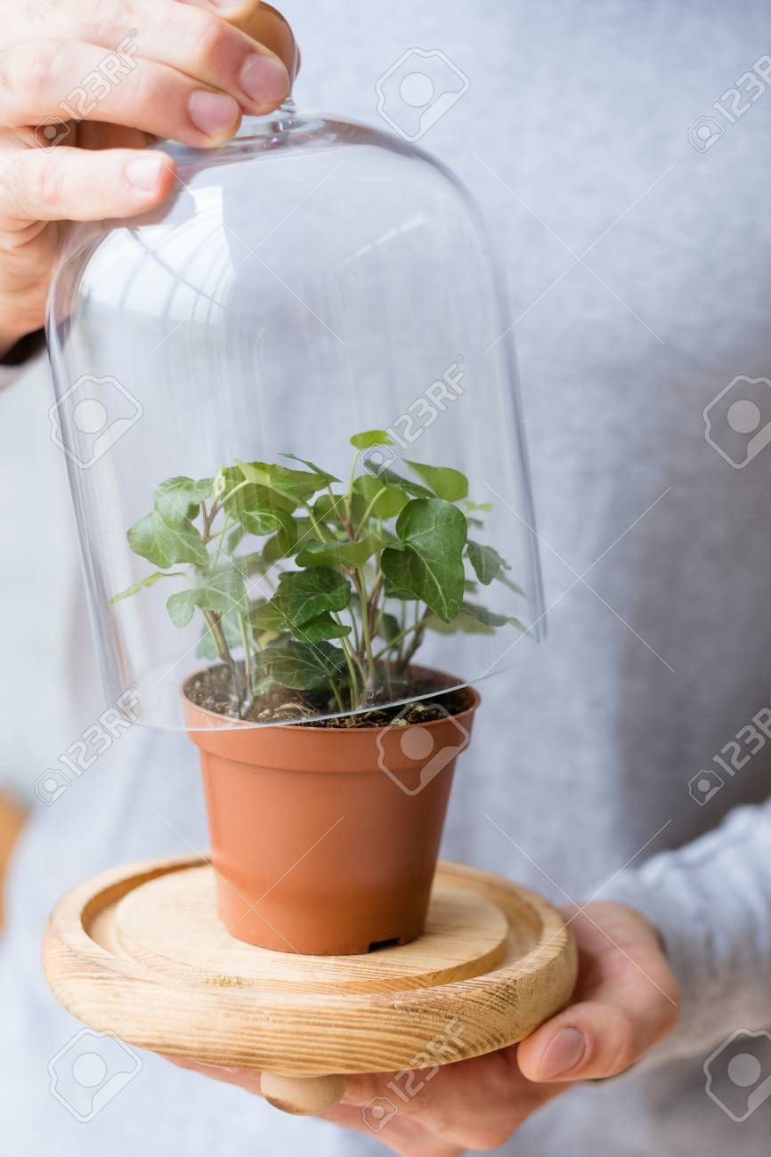 Conceptual Ecosystem Home Plant Care Man Opening Glass Dome