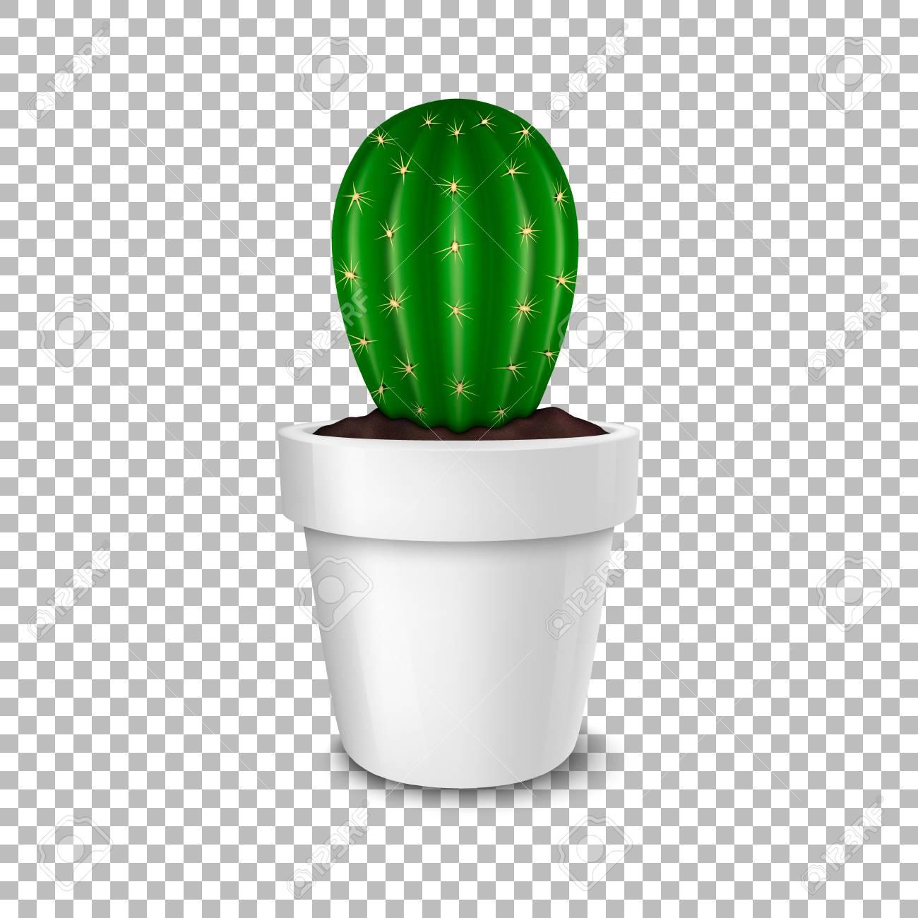 Realistic Decorative Cactus Plant In White Flower Pot Icon Closeup