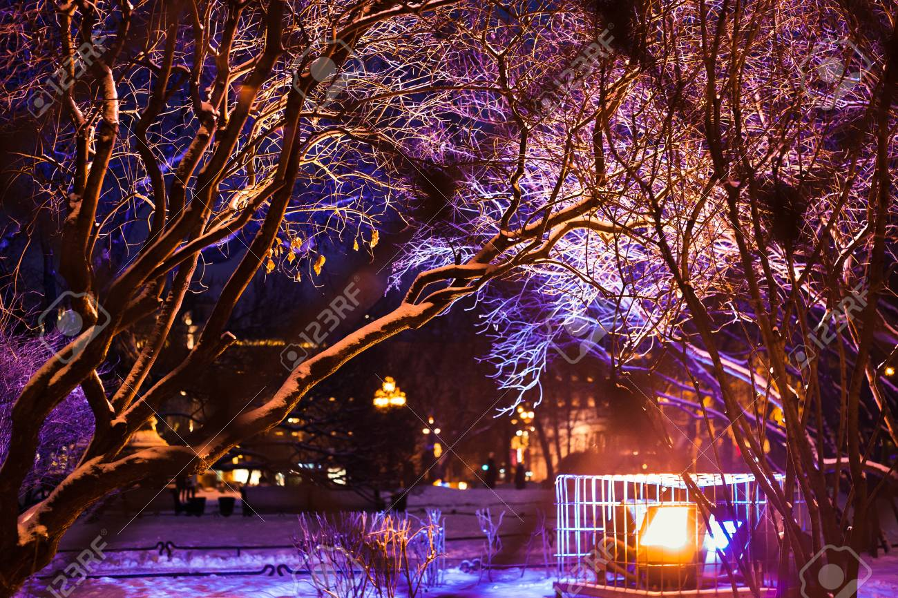 Tree Branches Covered With Bright Christmas Lights And Snow Stock