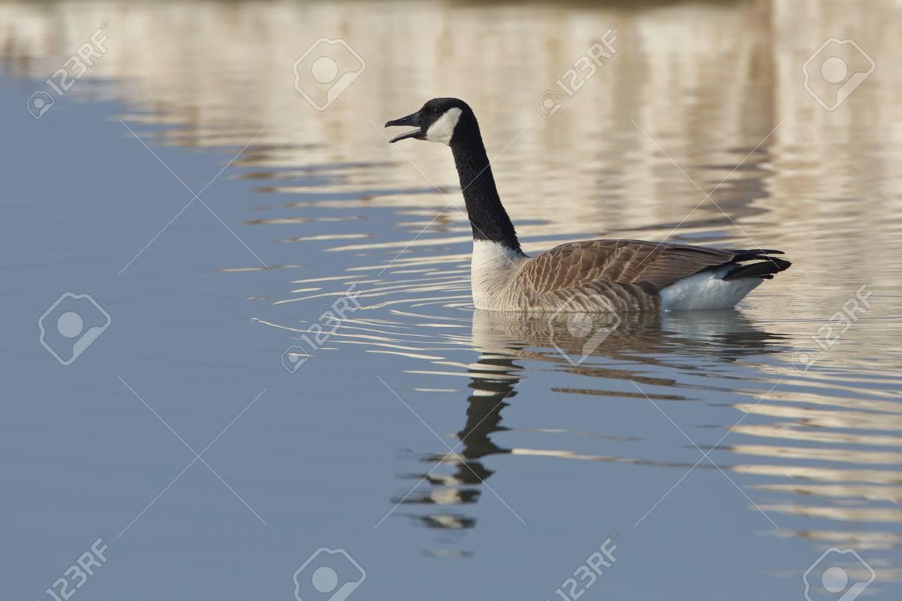 canada goose homme printemps