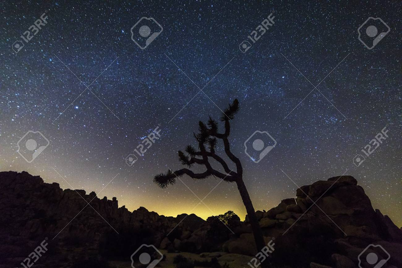 Joshua Tree And Rock Formations Silhouetted Against A Star Studded