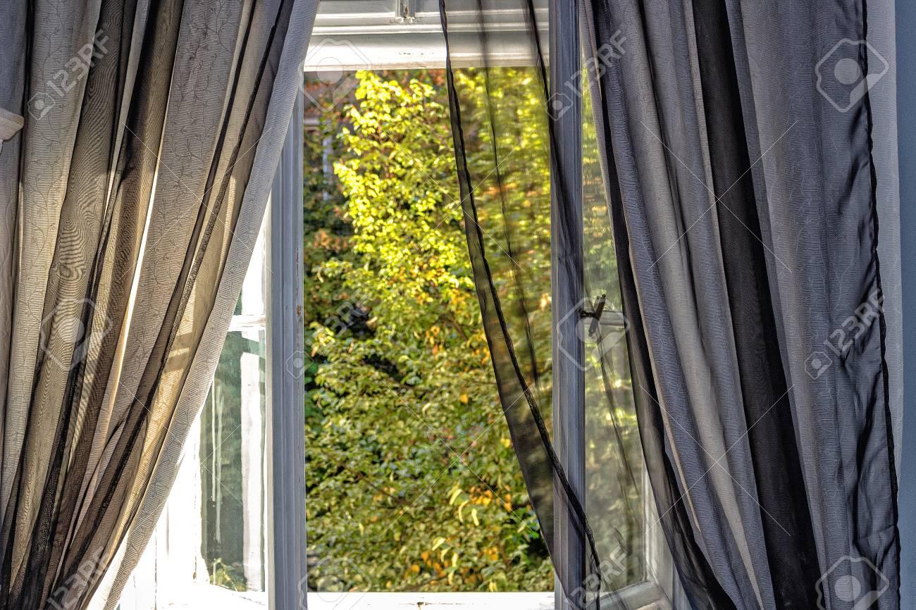 stockfoto venster met donkere gordijnen uitzicht op bomen en planten in een groene tuin