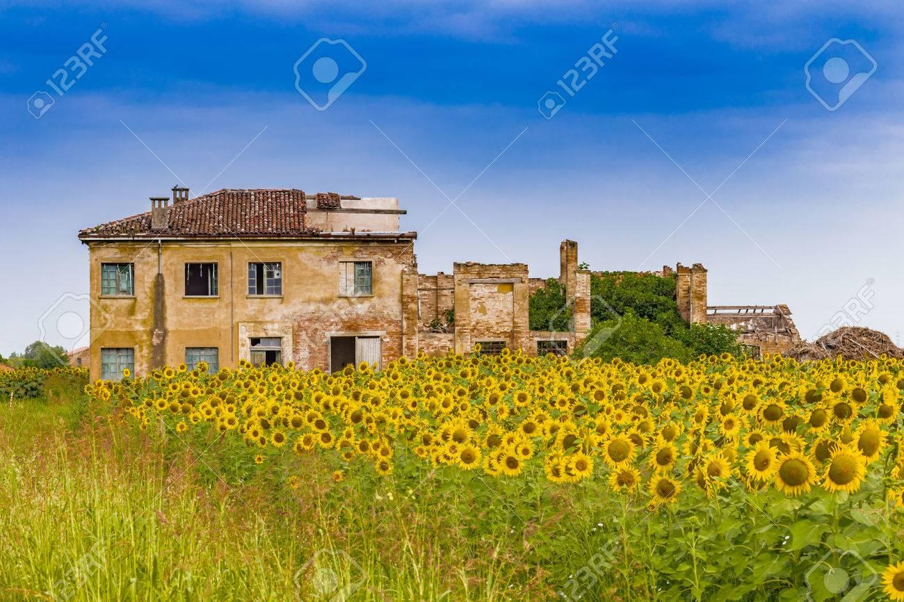 Feld Von Sonnenblumen In Der Nähe Eines Landhaus Malerei Farben Auf ...