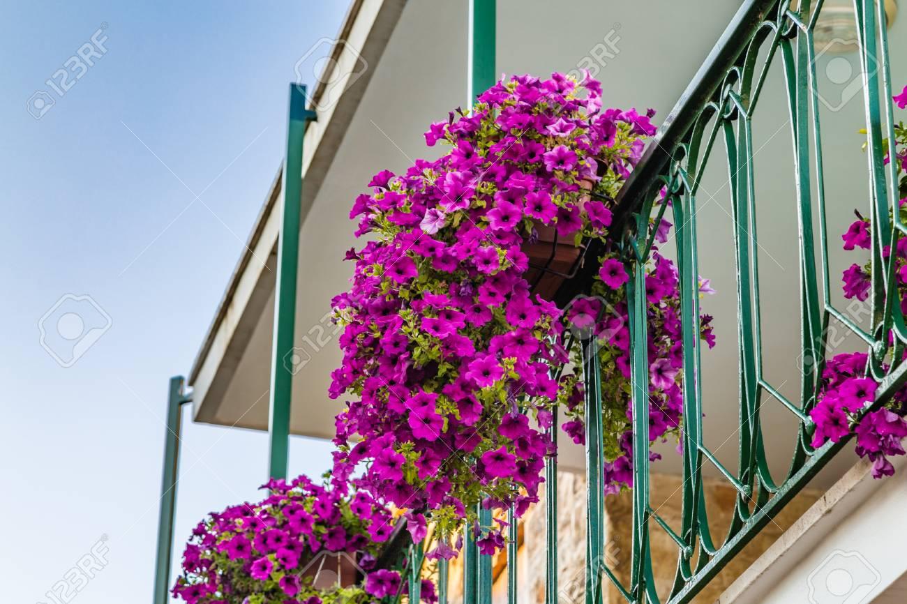 Topf Von Petunien Von Einem Balkon Mit Einem Metallgelander Hangen