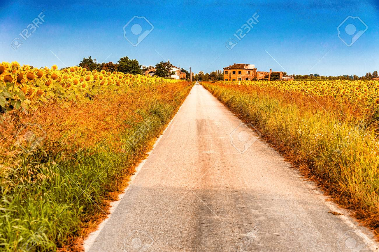 Field Of Sunflowers Along A Country Dirt Road Painting Colors Stock Photo Picture And Royalty Free Image Image 65997779