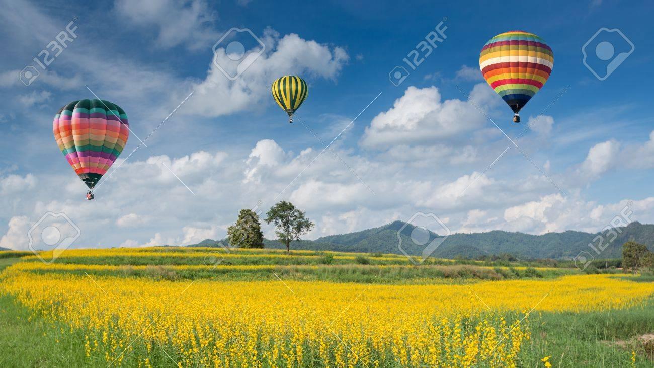 Hot air balloon over yellow flower fields against blue sky - 16917088