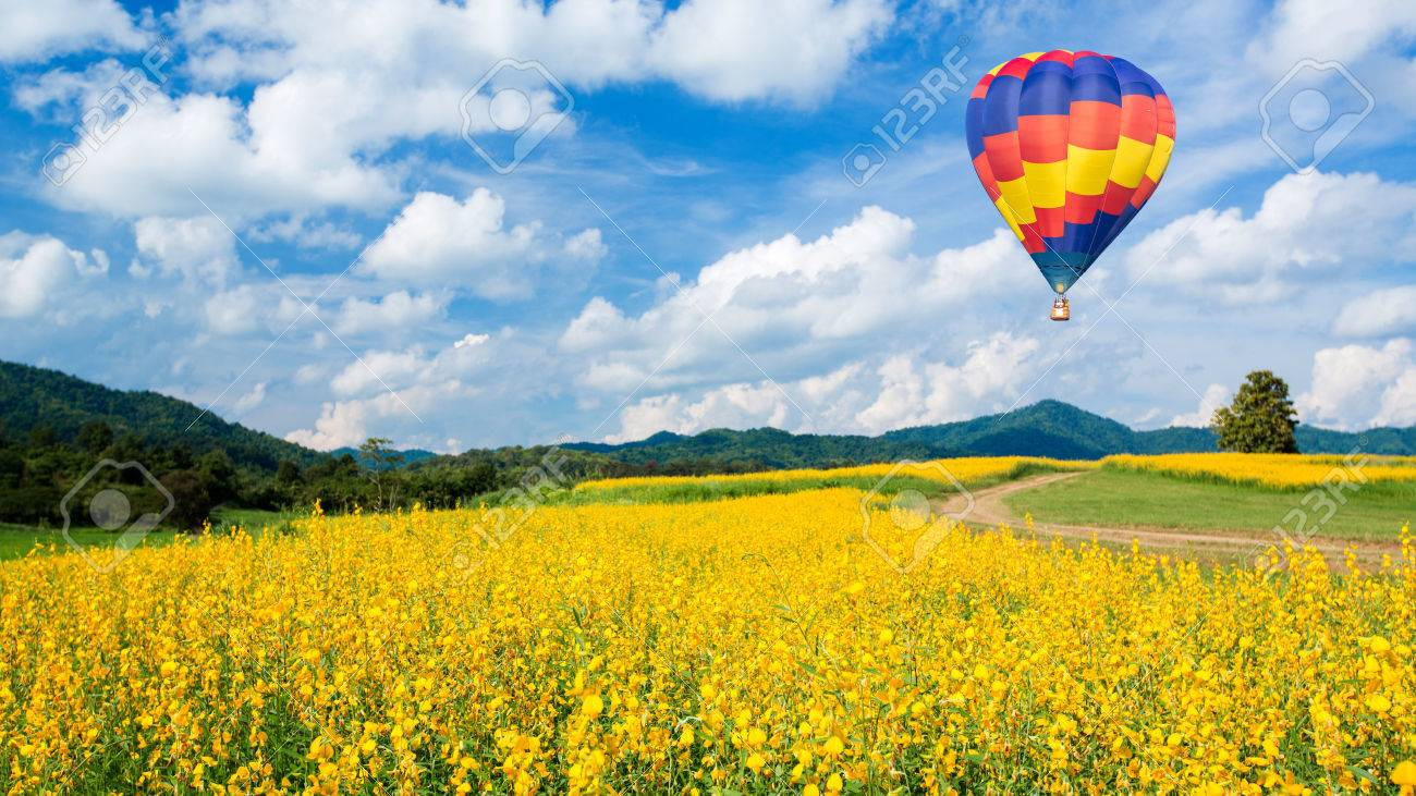 Hot air balloon over yellow flower fields and blue sky background - 34191999