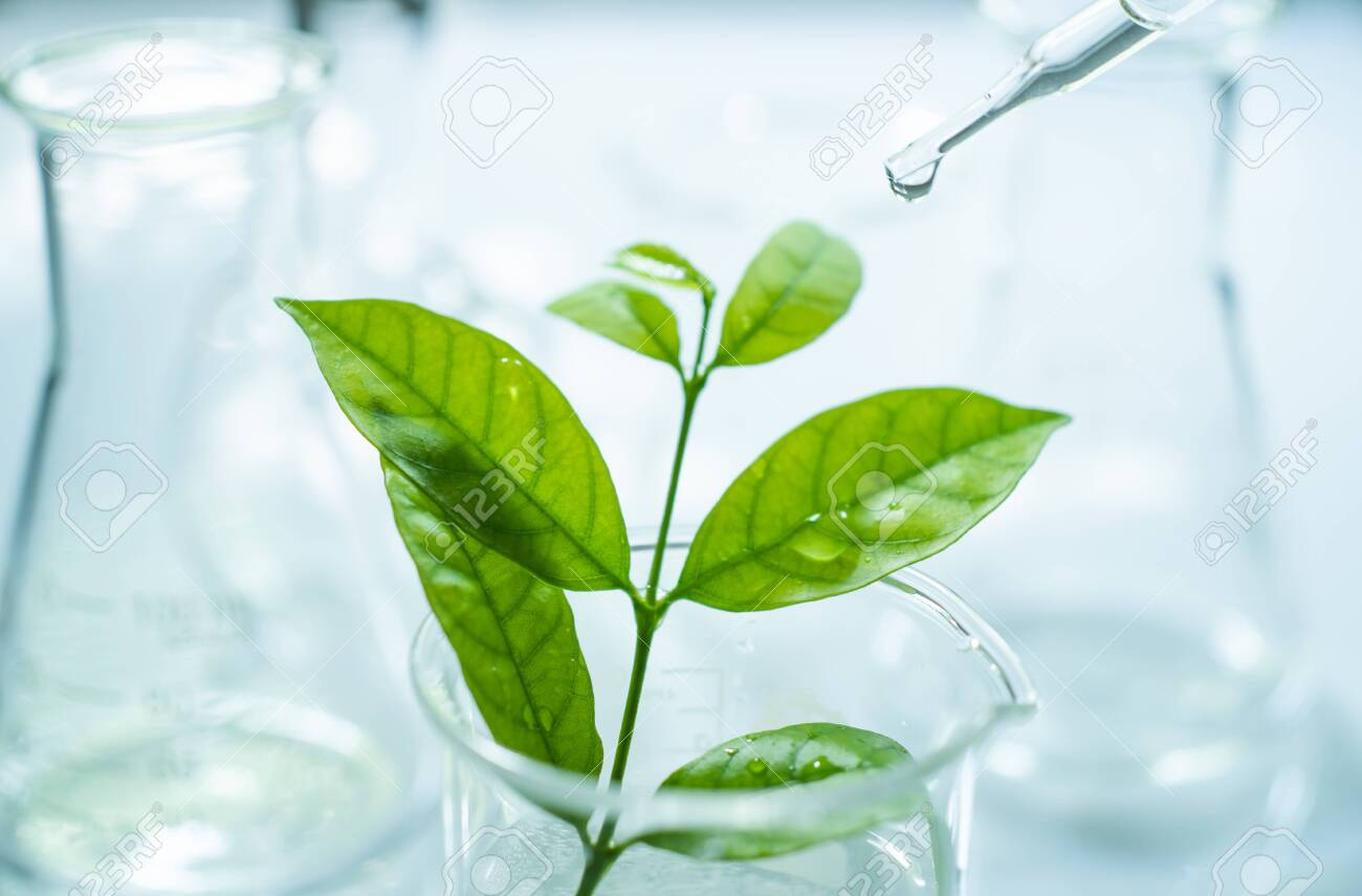 Researcher is dropping the reagent into test bigger. Biotechnology concept with scientist in lab - 130930701