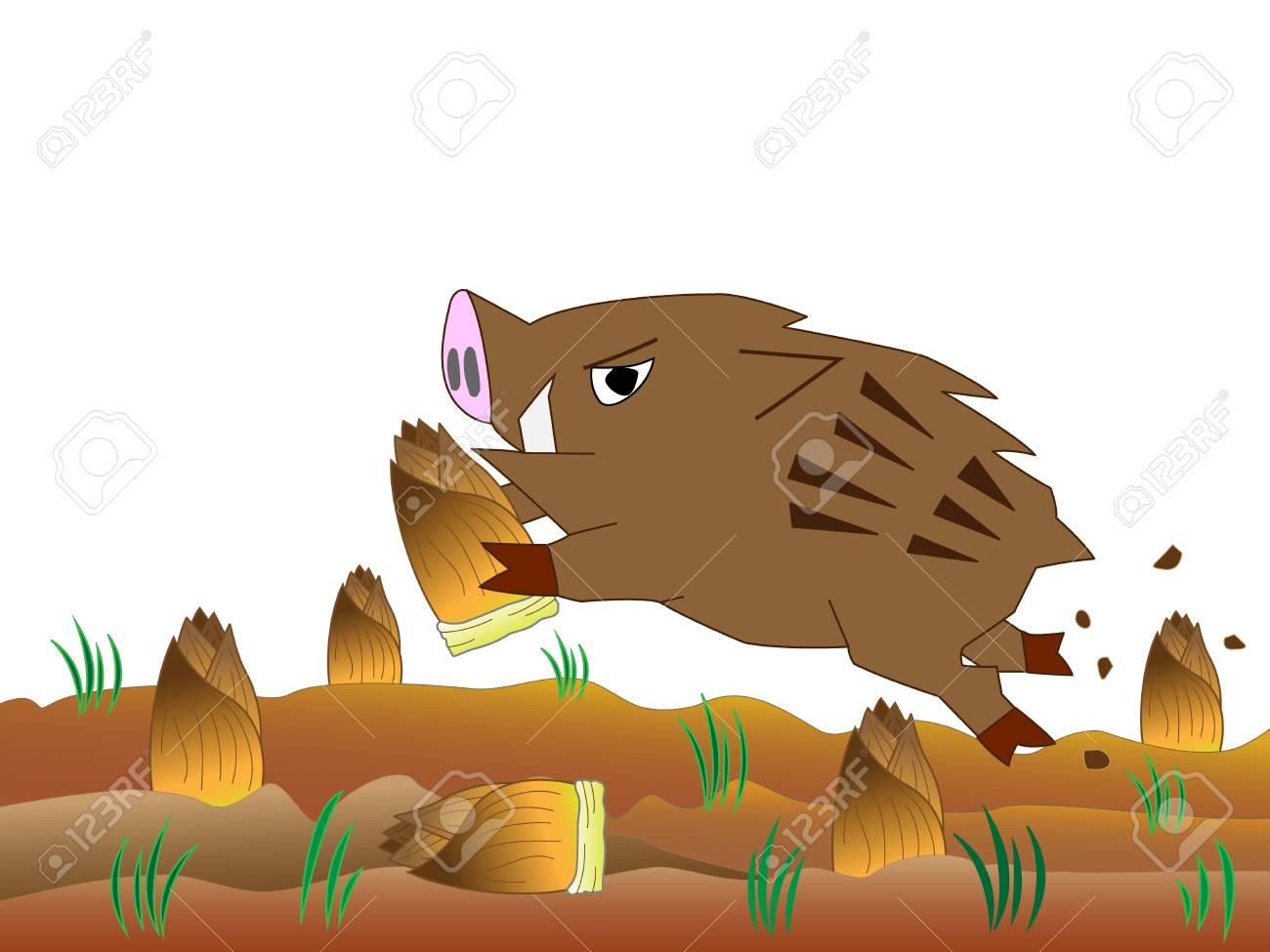イノシシの荒廃タケノコを食べる