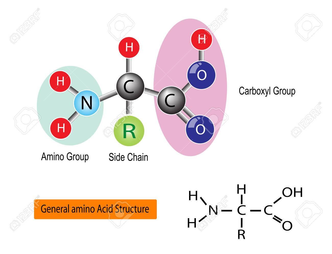Estructura General De Un Aminoácido Vector