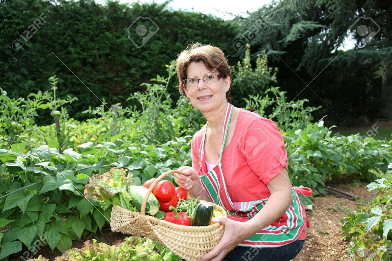 Kitchen Gardener Senior Woman Picking Vegetables In Kitchen Garden Stock Photo
