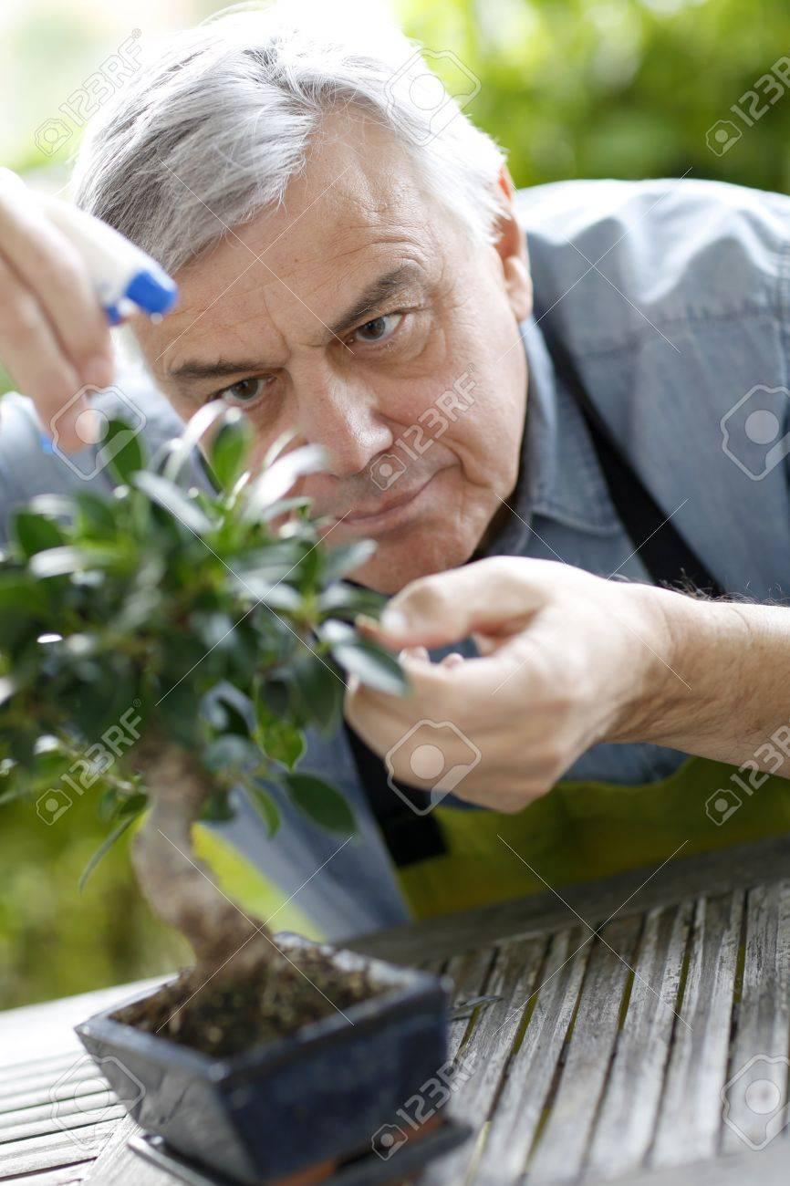 Senior man watering bonsai leaves Stock Photo - 16320762
