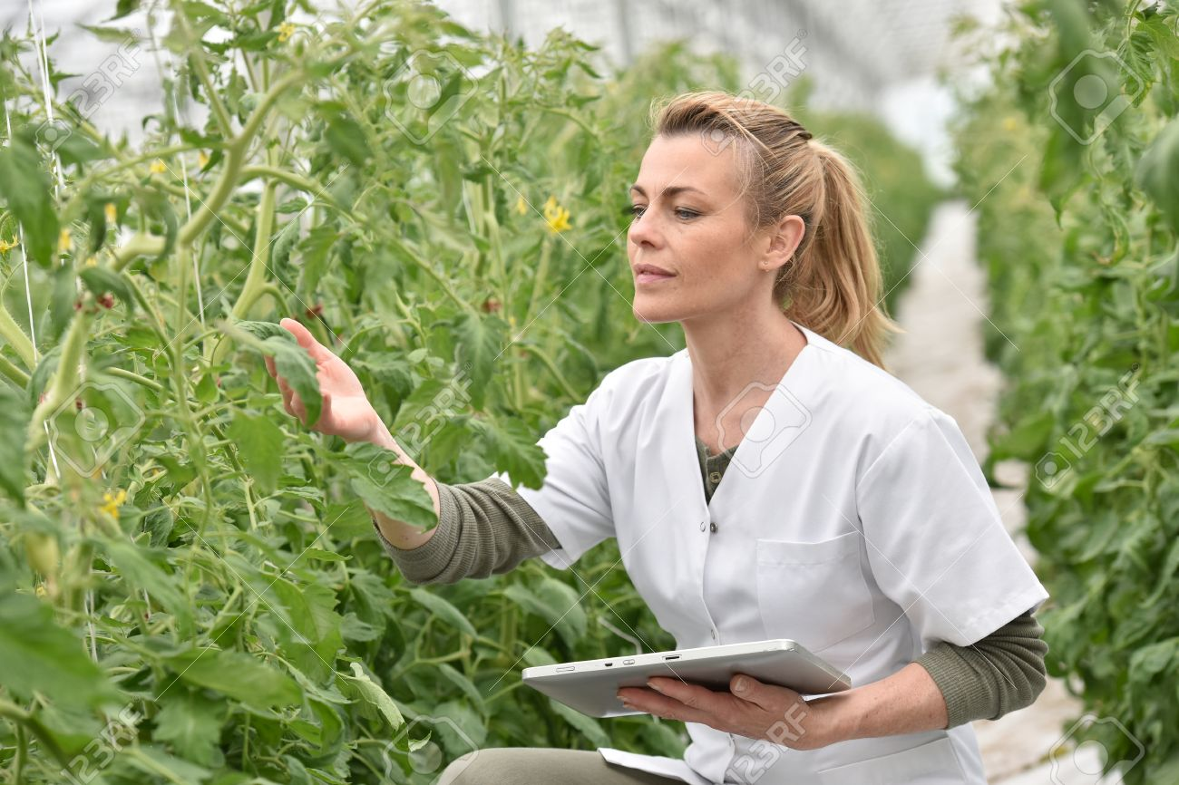 Agronomist Analysing Plants In Greenhouse Stock Photo, Picture And Royalty  Free Image. Image 56858369.