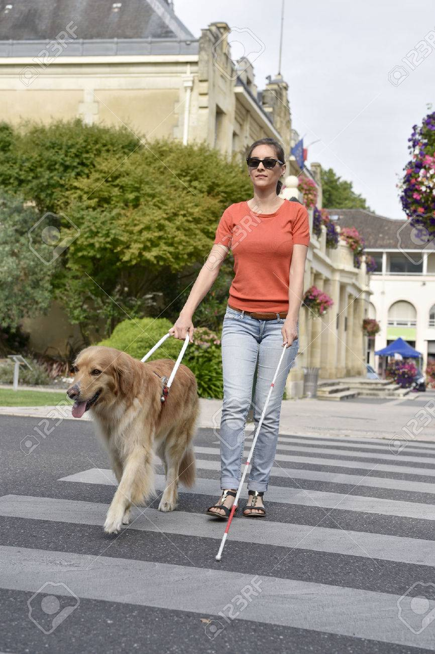 Blind woman crossing the street with help of guide dog Banque d'images - 60226925