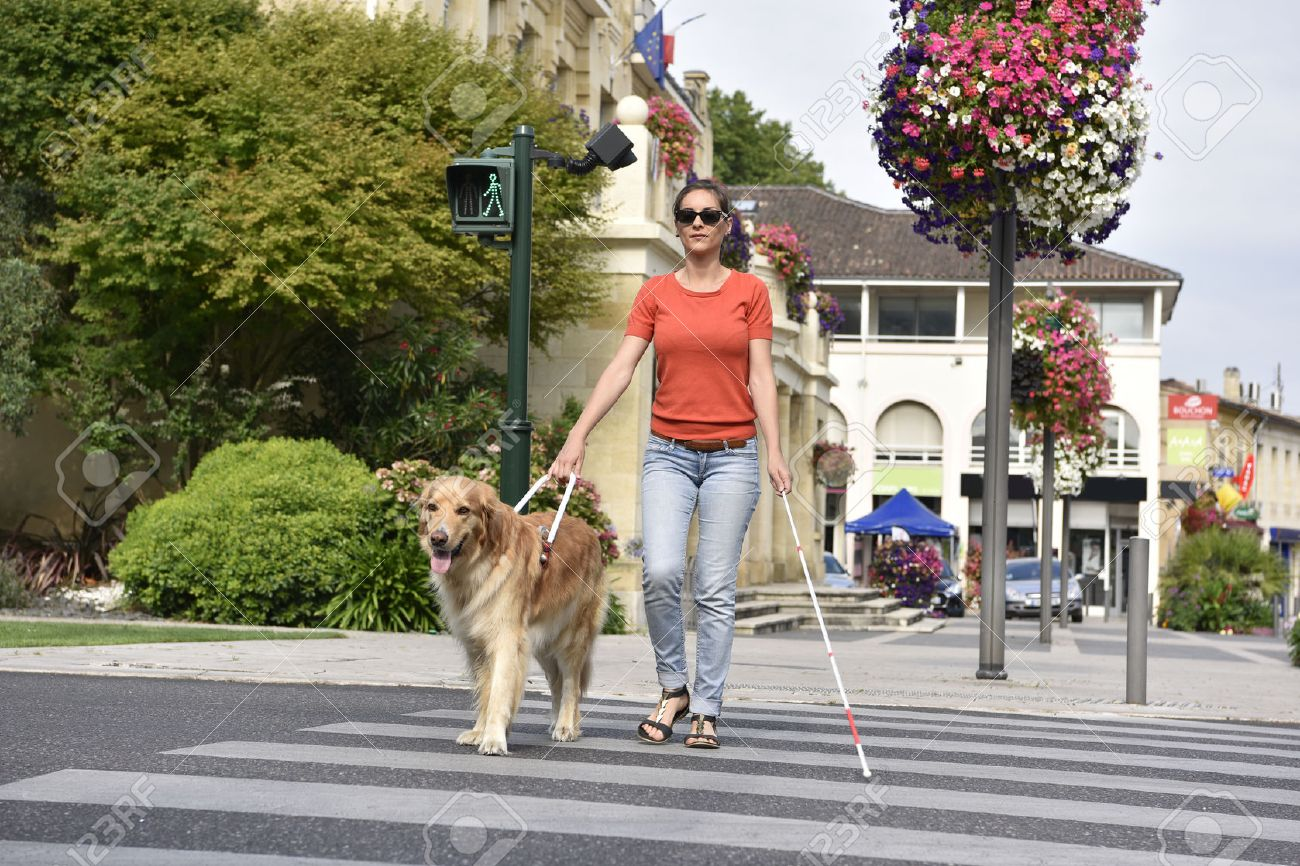 Blind woman crossing the street with help of guide dog - 60226988