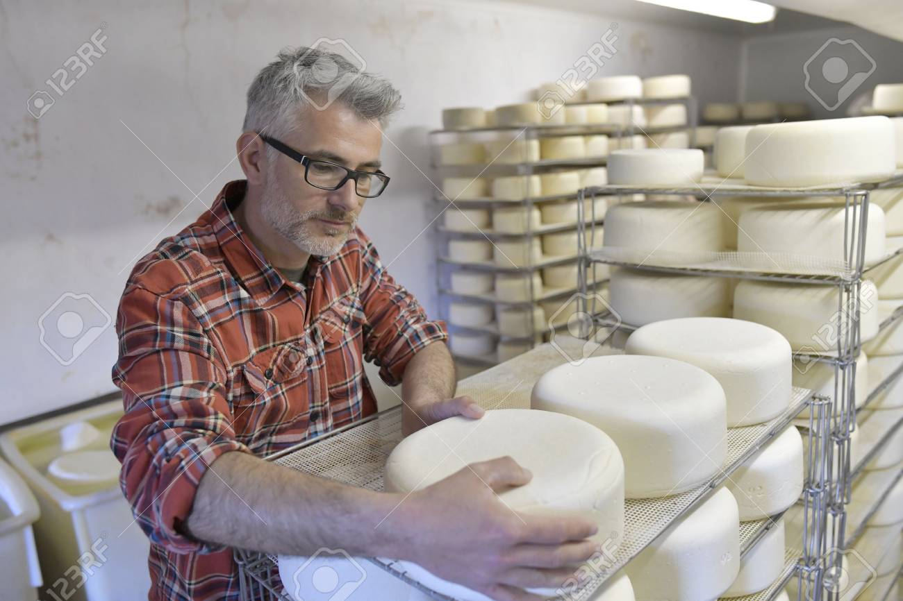 Cheese maker checking production in cheese cellar - 99813905