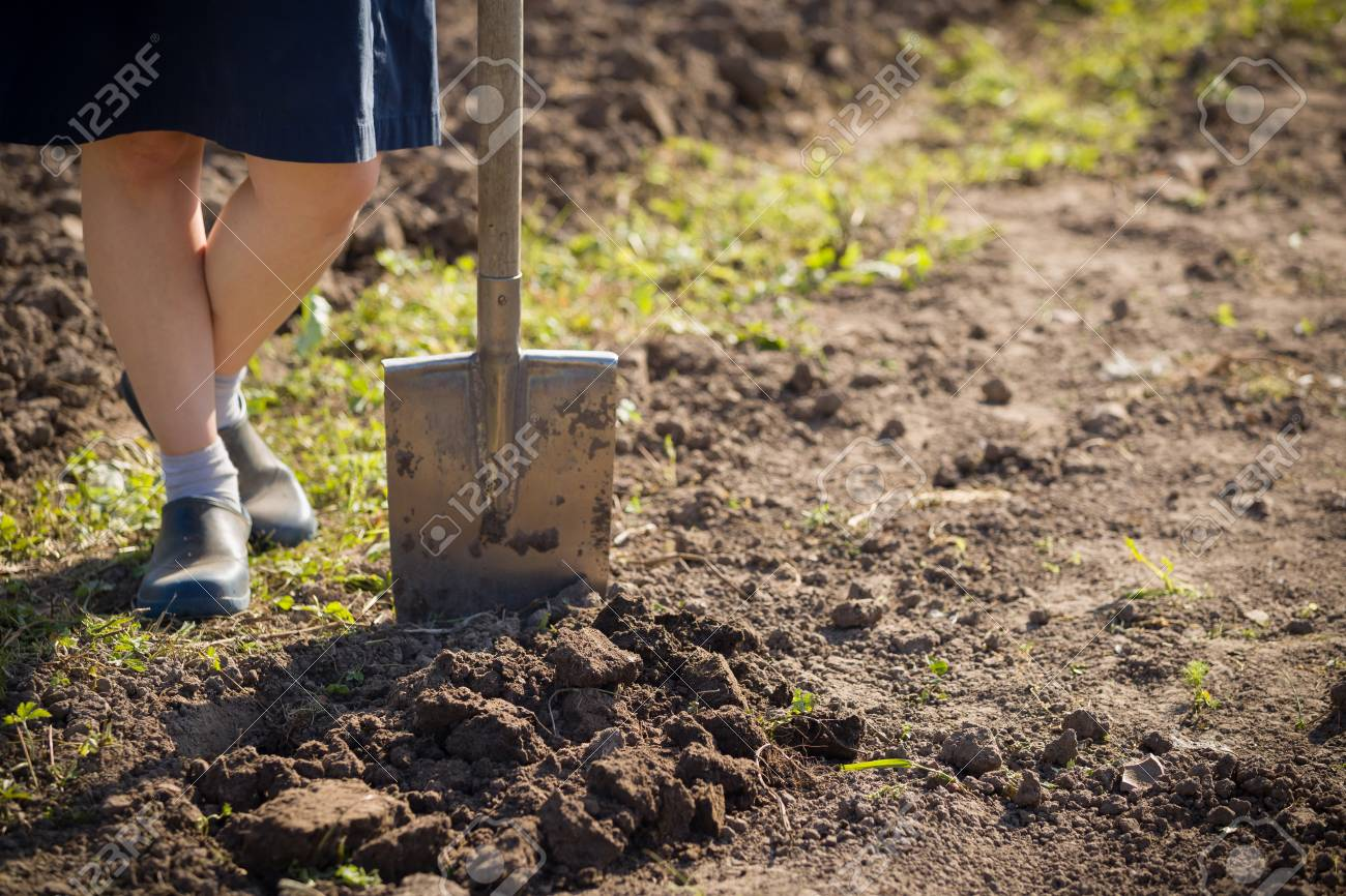 Closeup Of Shovel And Gardener\'s Feet On A Soil. Working In A ...