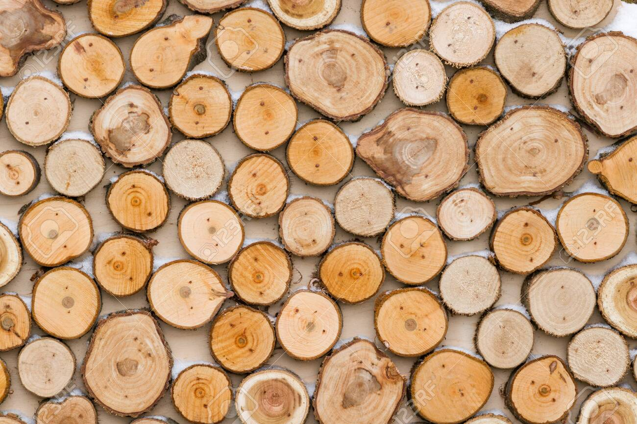 Top View On Many Thick Cut Tree Branches Table Decor Or Holiday Stock Photo Picture And Royalty Free Image Image 130400263