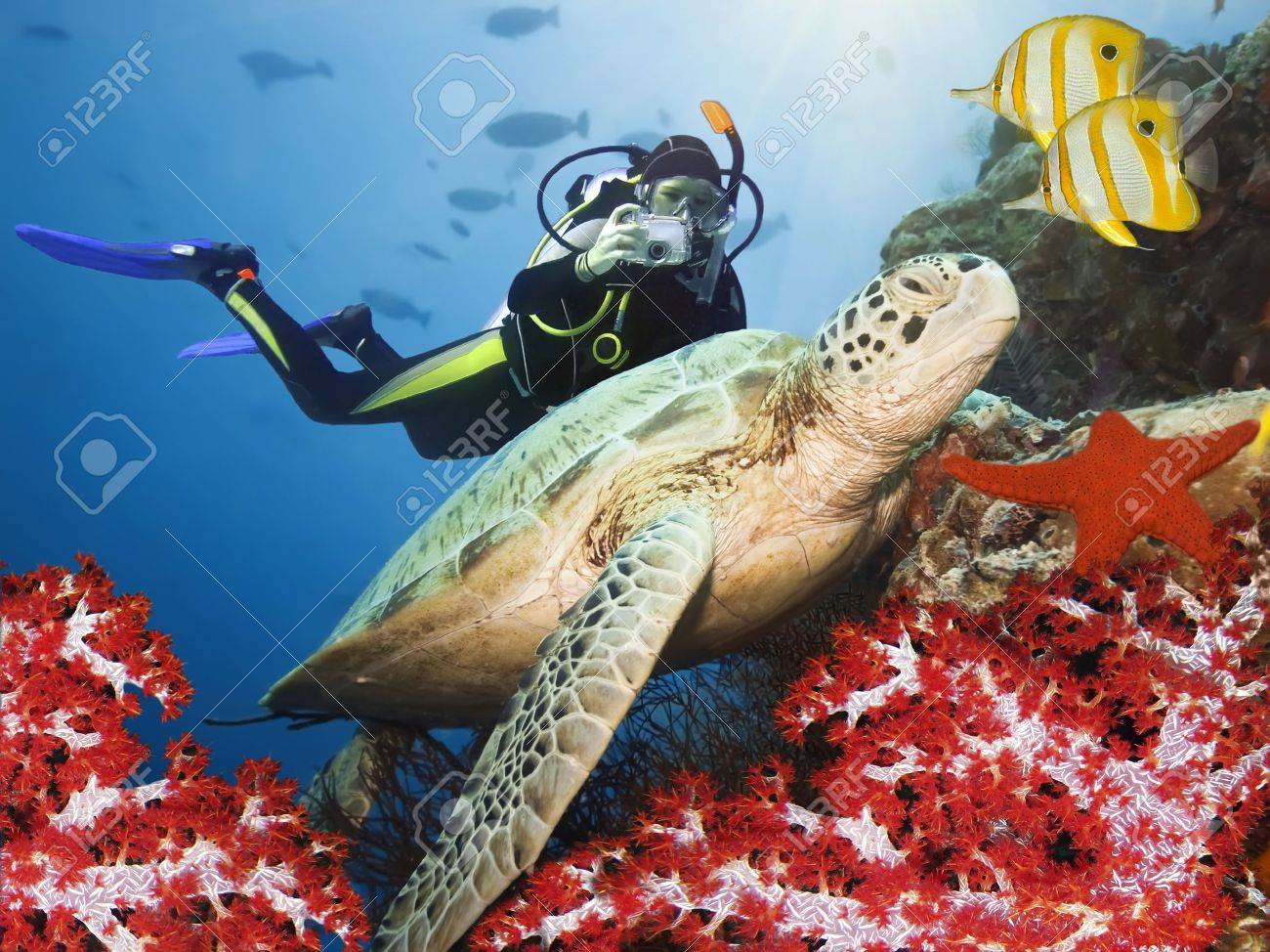 Green turtle underwater on a coral. Sipadan. Celebes sea Stock Photo - 4627326