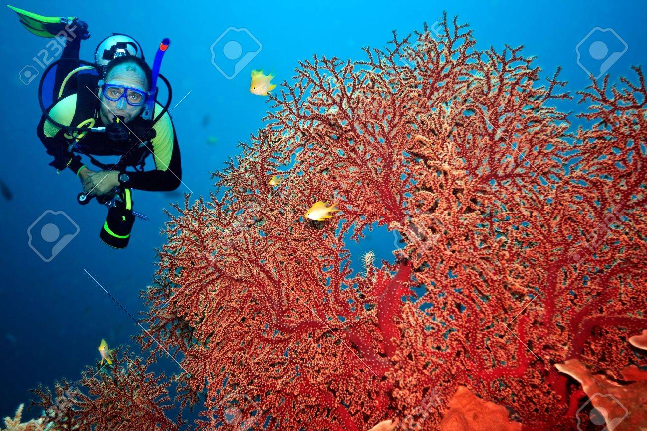 Underwater landscape with scuba diver and gorgonian coral - 6322114
