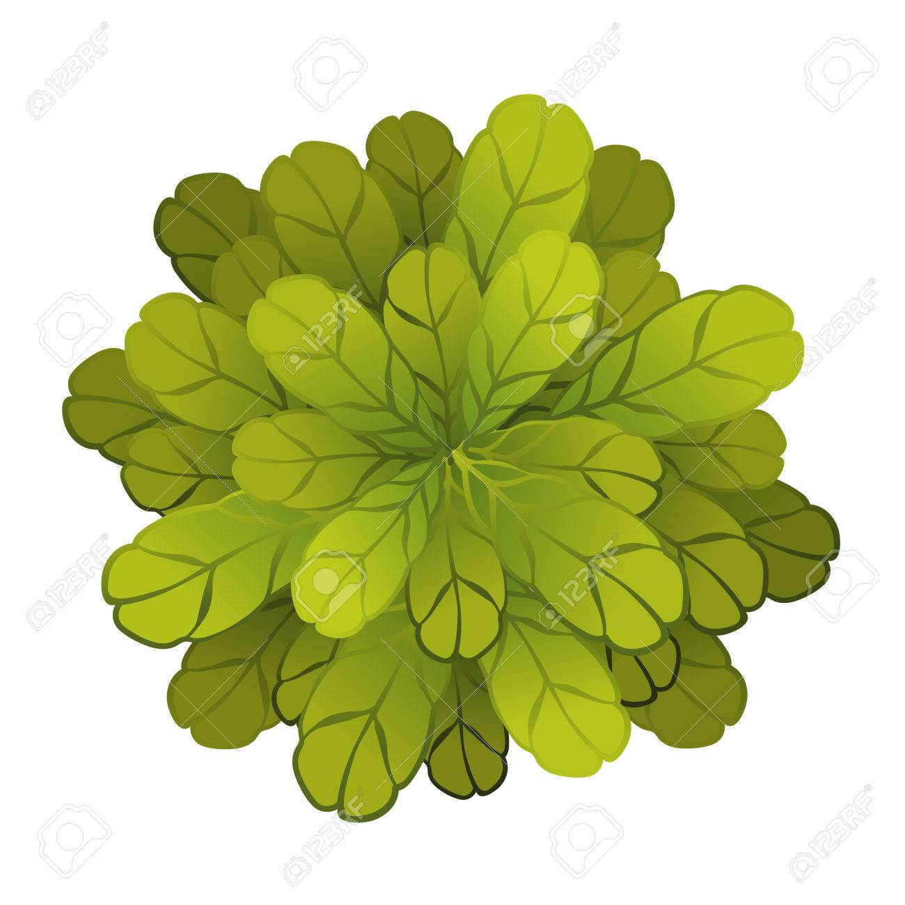 A Green Plant Or Tree, Top View. Vector Illustration, Isolated ... for Plant Top View Vector  75sfw