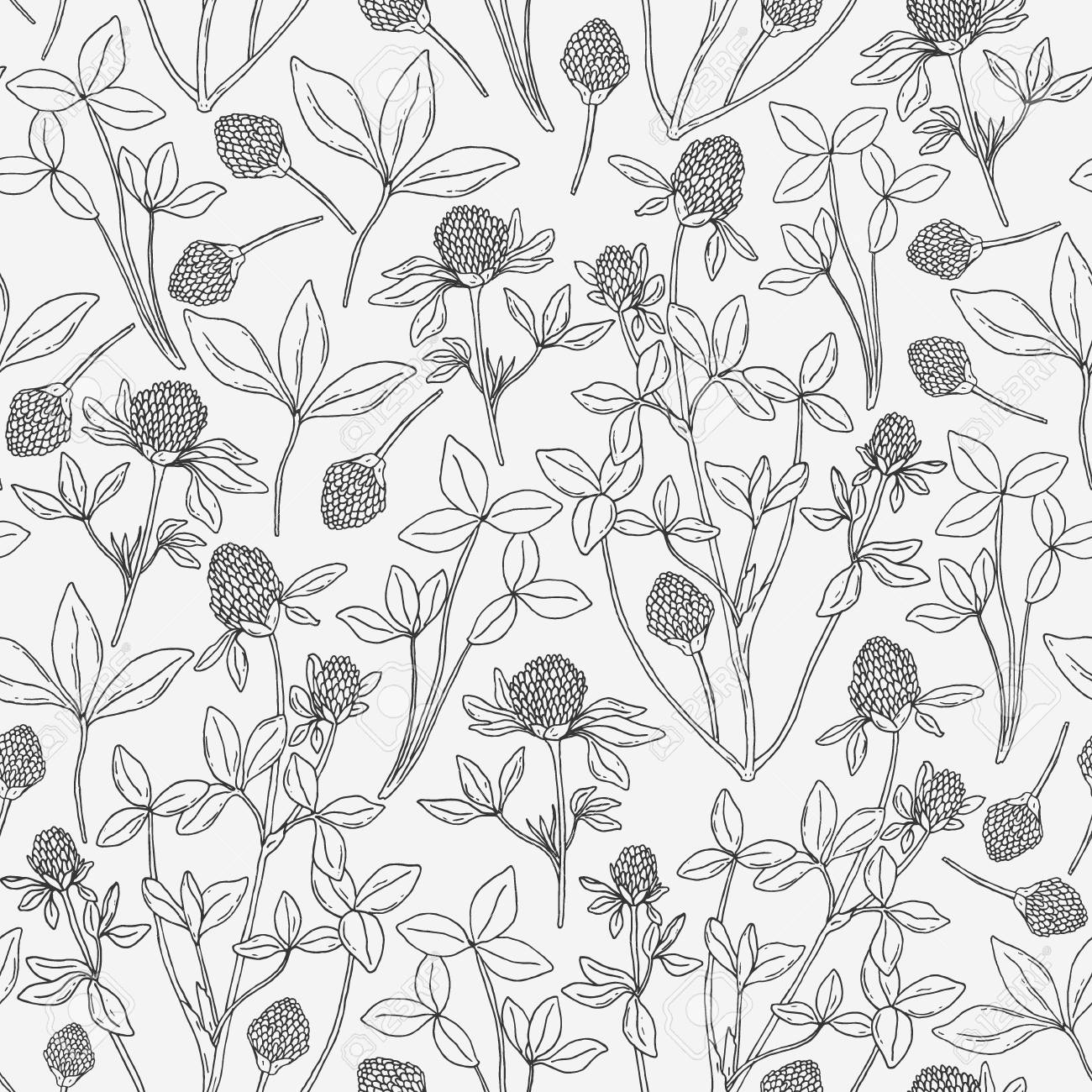 Botanical Seamless Pattern With Clover On White Background Wild