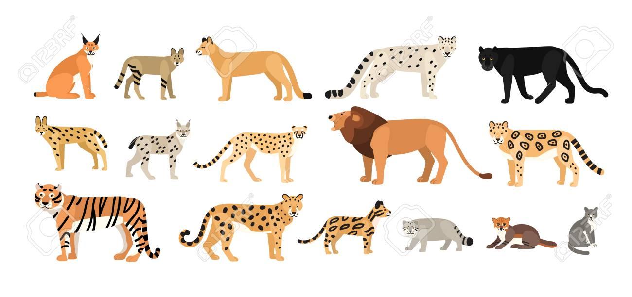 Colecao De Diferentes Gatos Selvagens E Domesticos Animais