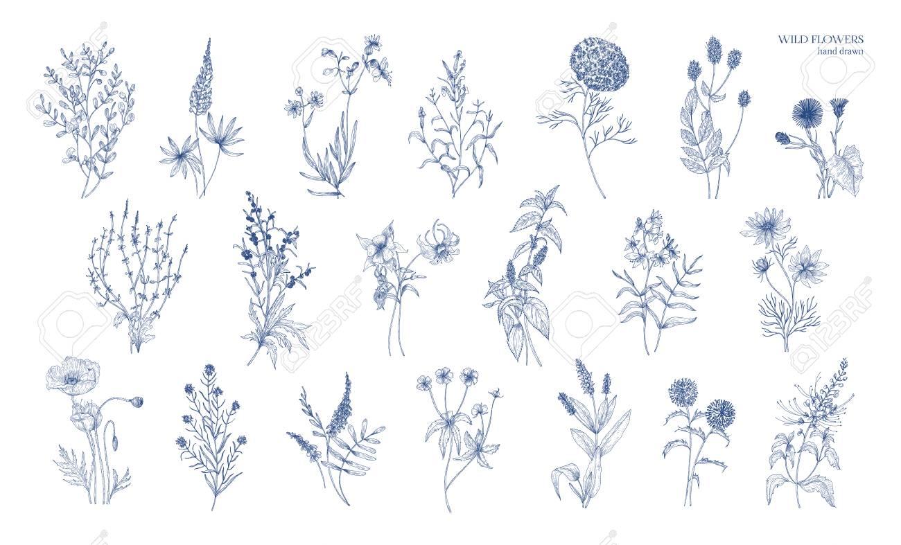 Collection De Dessins Botaniques Détaillés Réalistes D Herbes De Prairie Sauvages De Plantes à Fleurs Herbacées De Magnifiques Fleurs épanouies