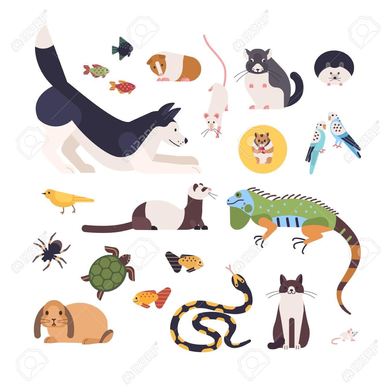 Colecao De Animais De Estimacao Isolado No Fundo Branco Conjunto