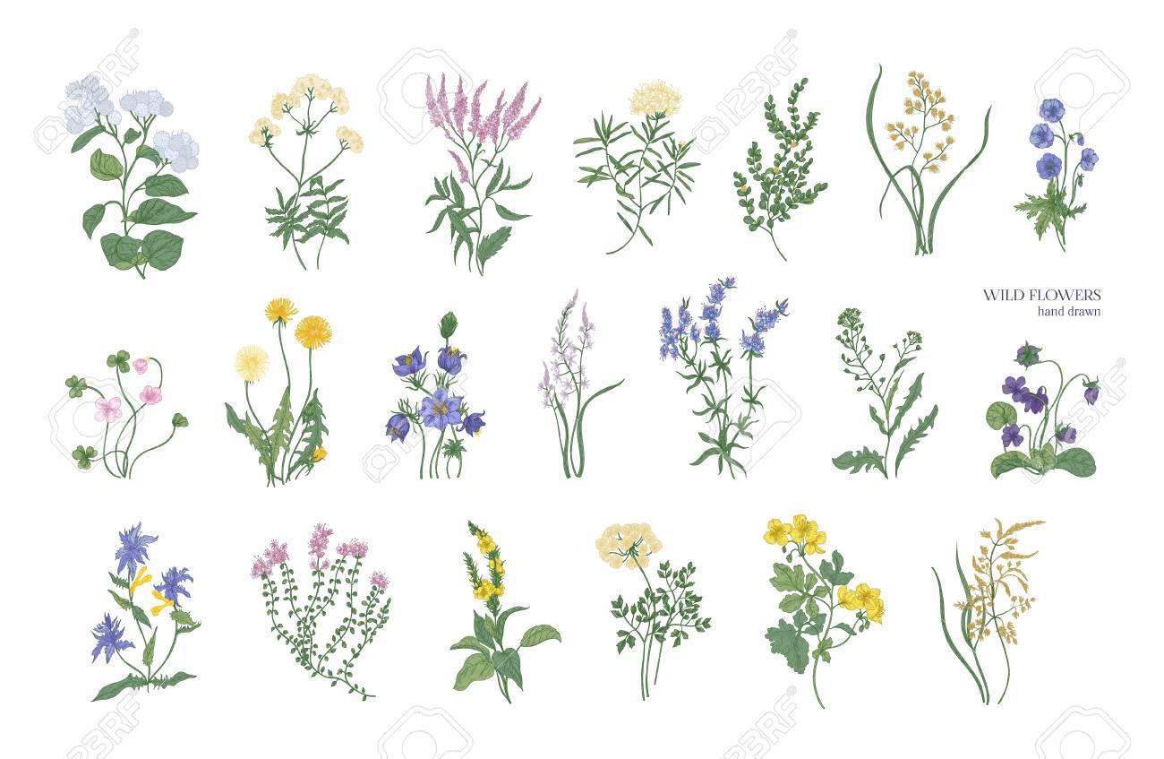 Collection De Dessins Détaillées De Différentes Fleurs Botaniques Et Des Plantes Décoratives Florale Isolé Sur Fond Blanc Des Garnitures De Fleurs